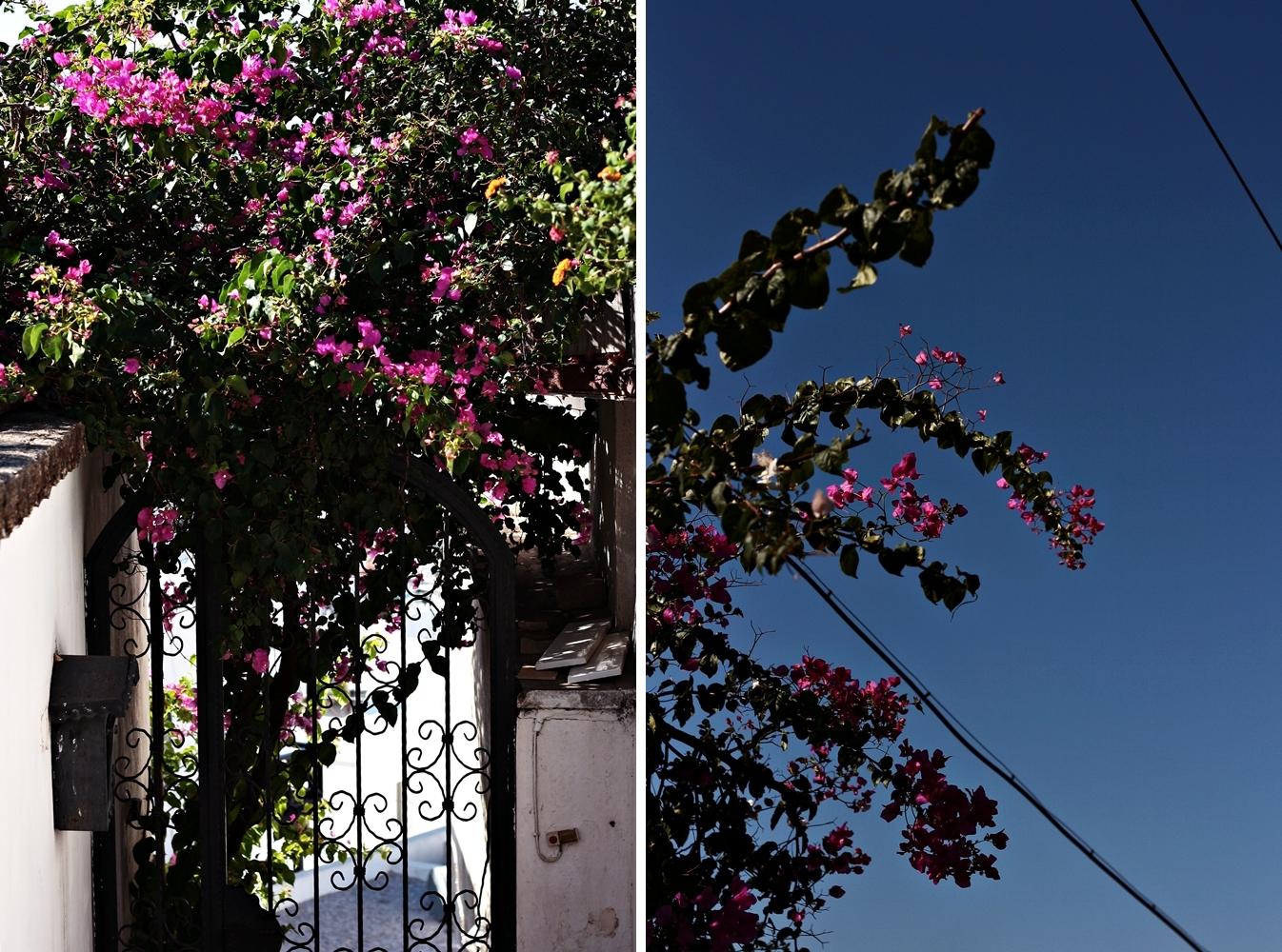 bodrum_różowe_kwiaty